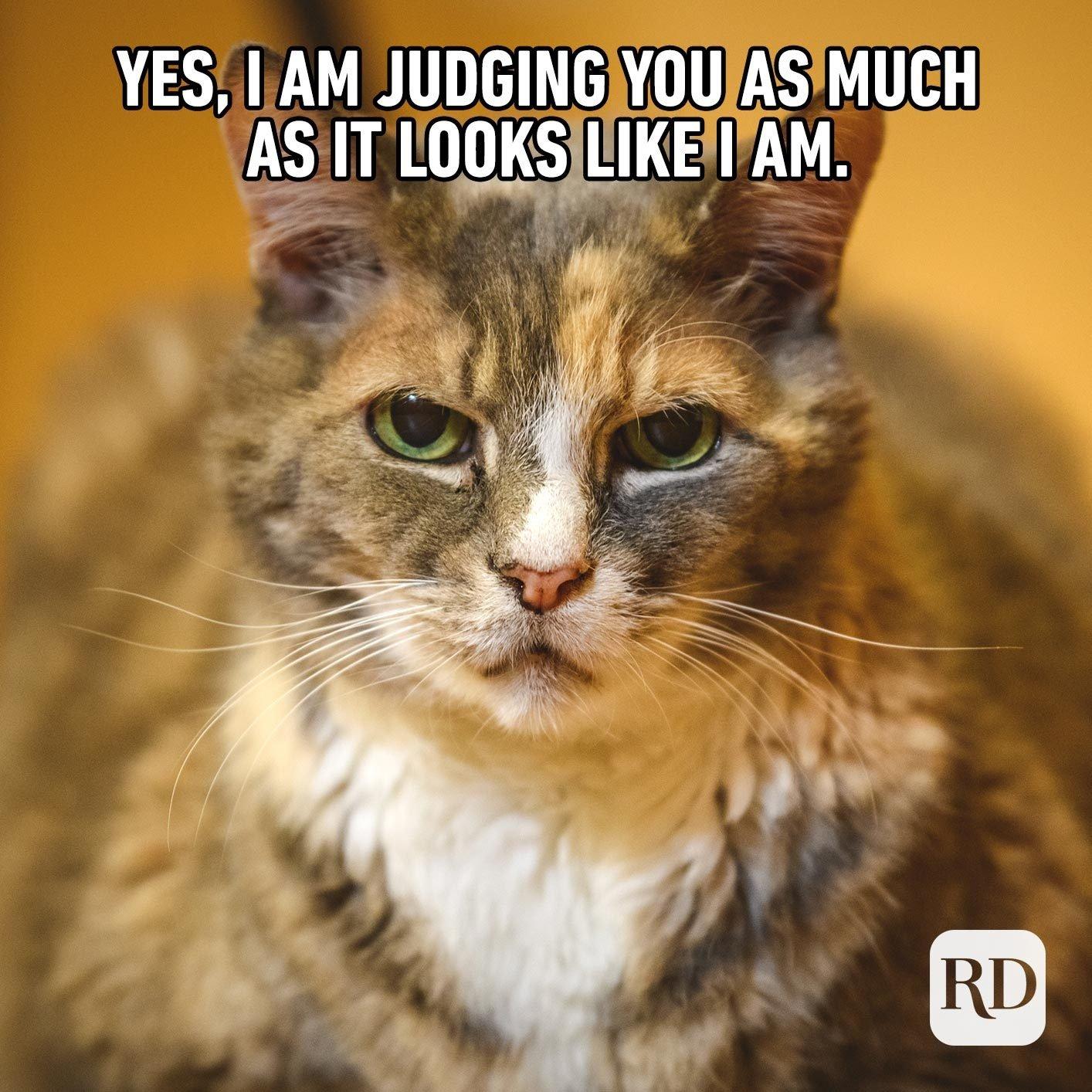 Judger