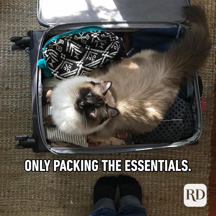 Cat trip