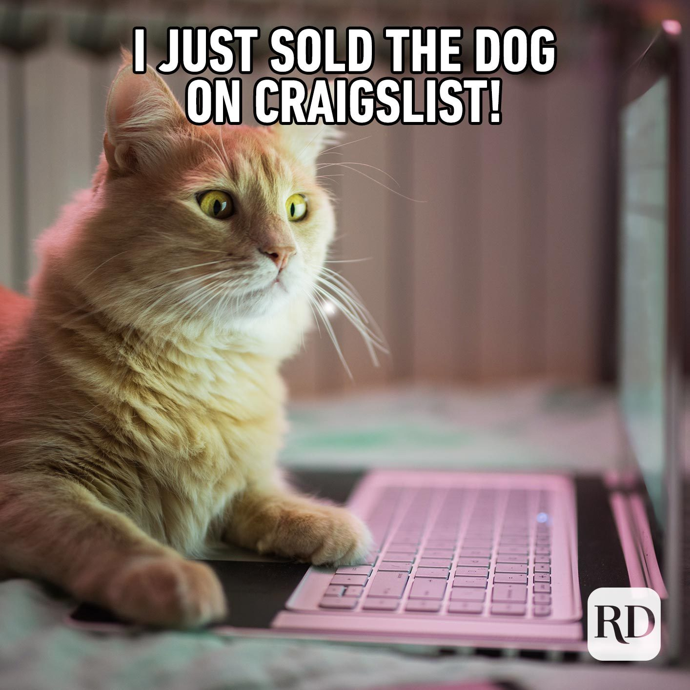 In the market for a dog?