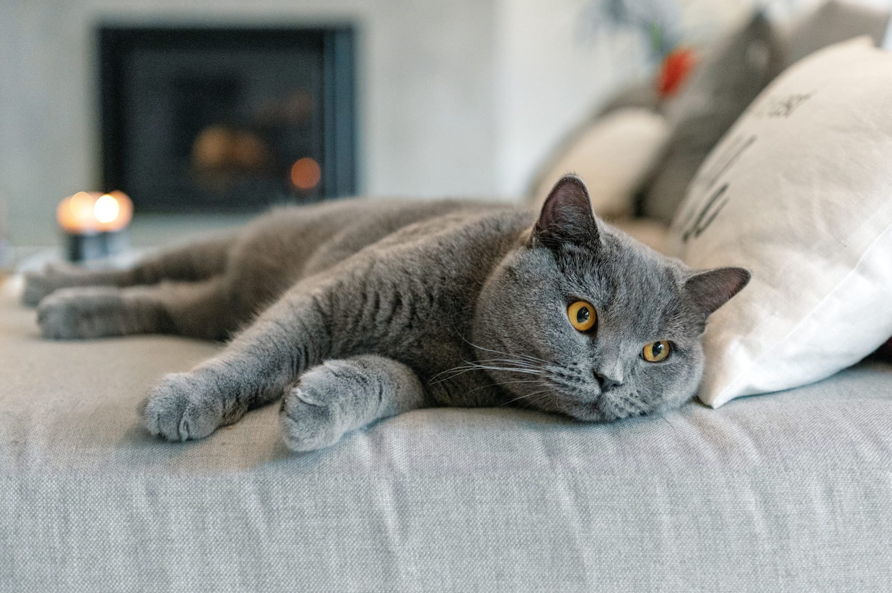 Cat lying down on a sofa