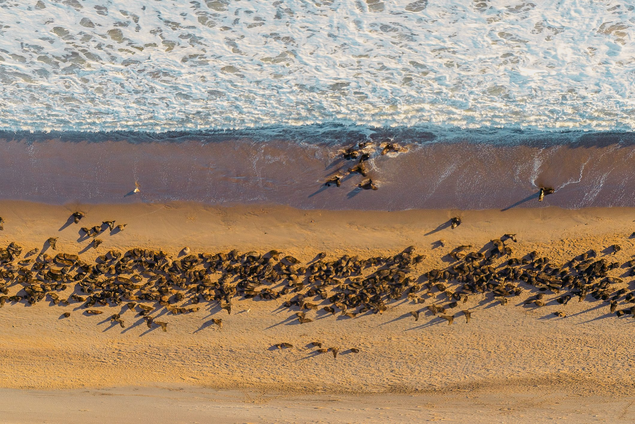 Seals on sandy beach