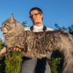 10 Large Cat Breeds That Make the Cutest Pets