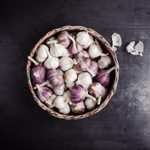 How to Grow Garlic in Your Organic Garden