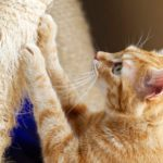 Cat Declawing: Pros, Cons, and Safer Alternatives
