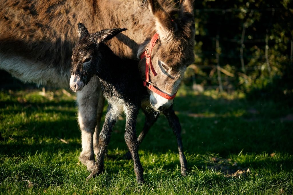 Agricultural Work Continues Amid Coronavirus Lockdowns