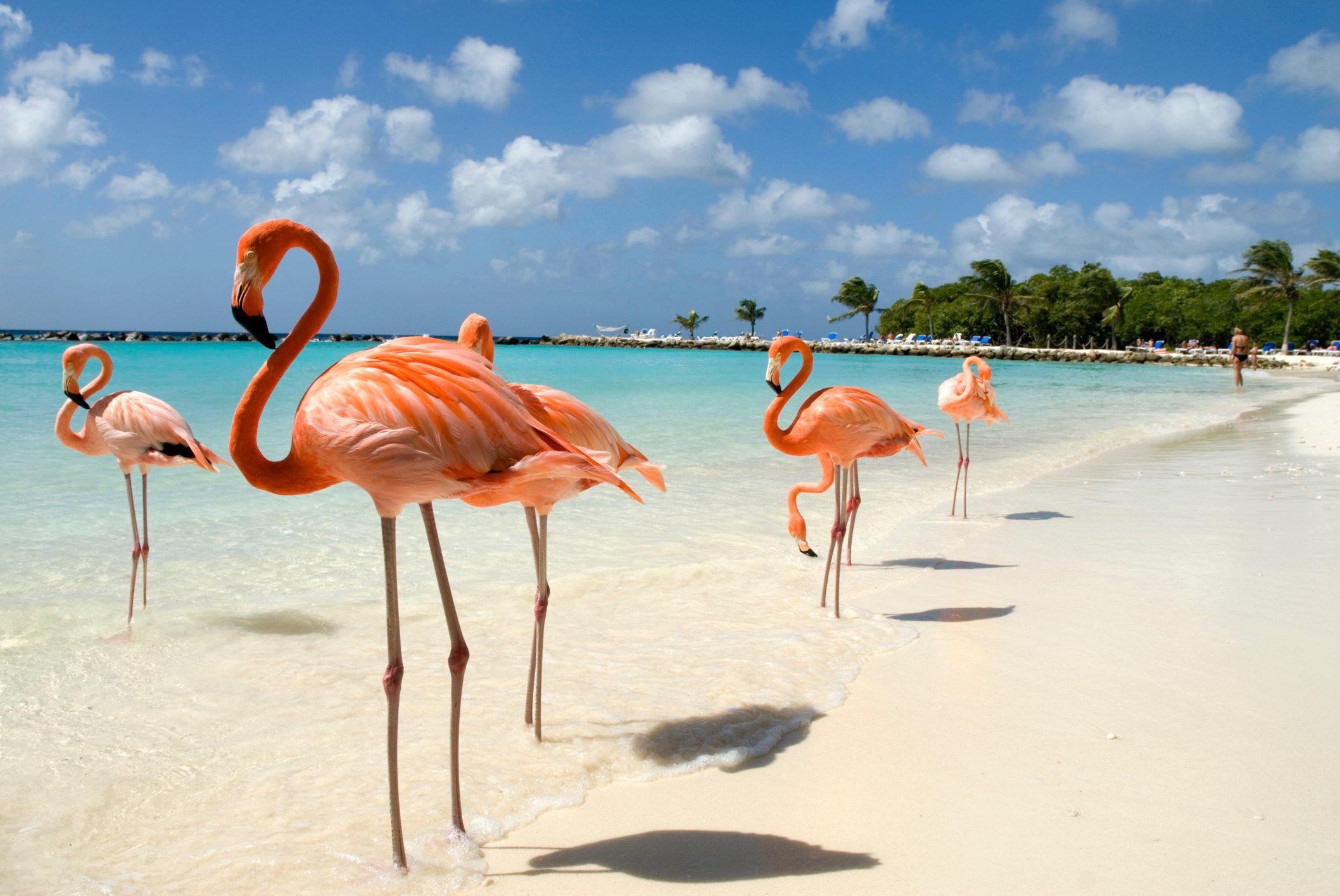 Flamingos on the Beach