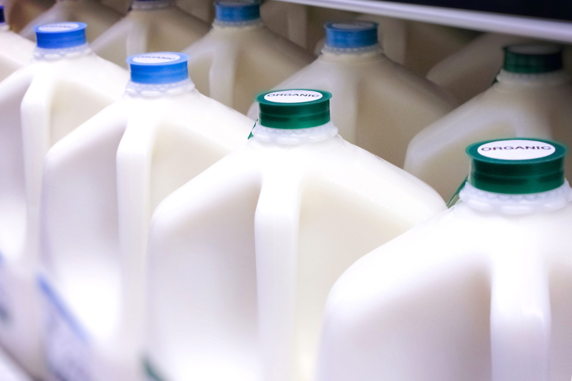 jugs of milk in a store refrigerator