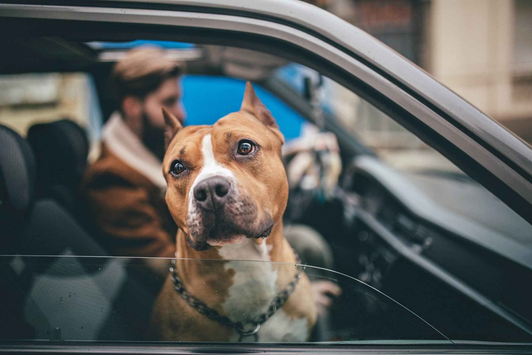 Man enjoys the ride home as much as his dog