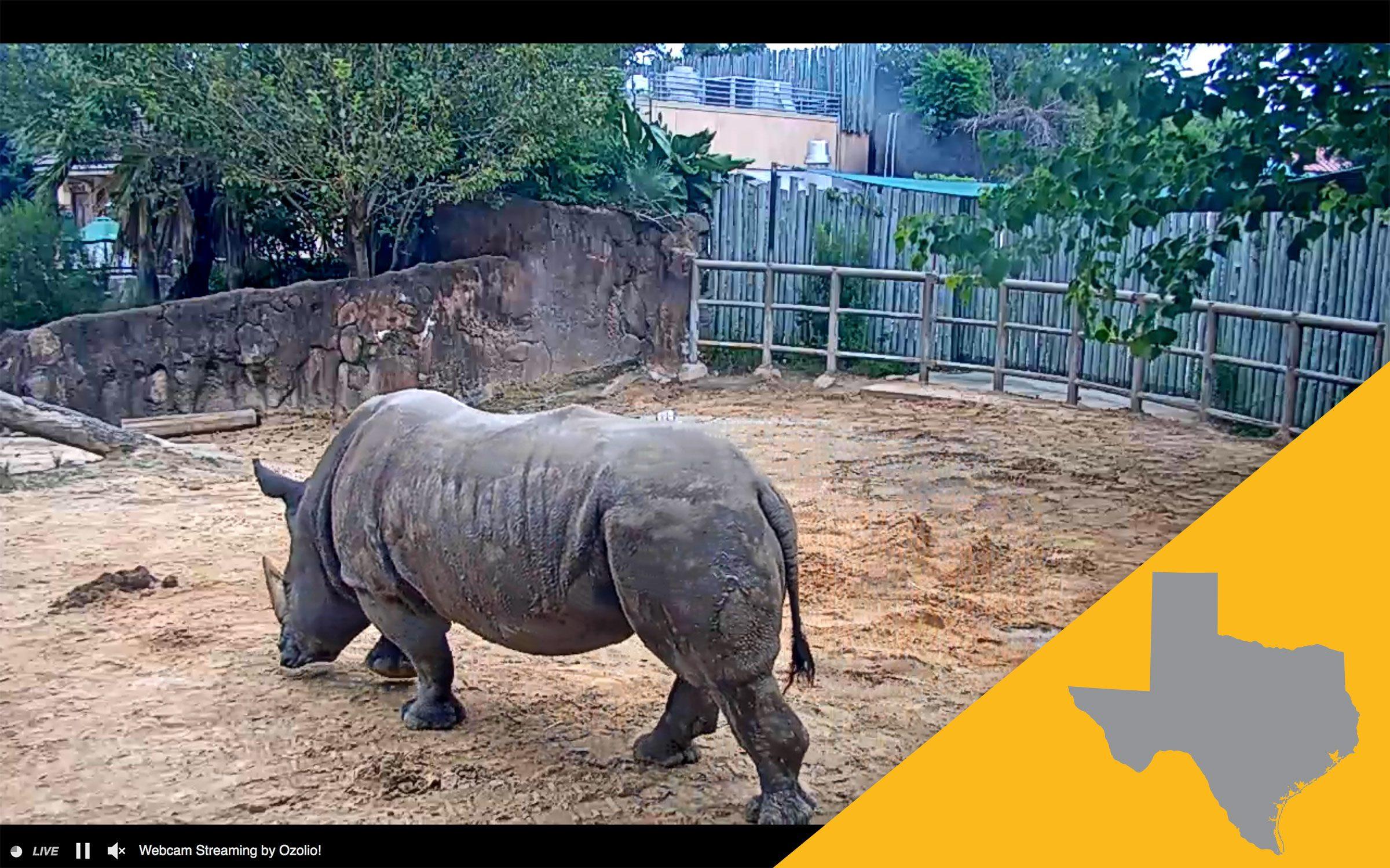Houston zoo virtual tour