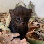 15 of the Cutest Baby Animals Born During the Pandemic