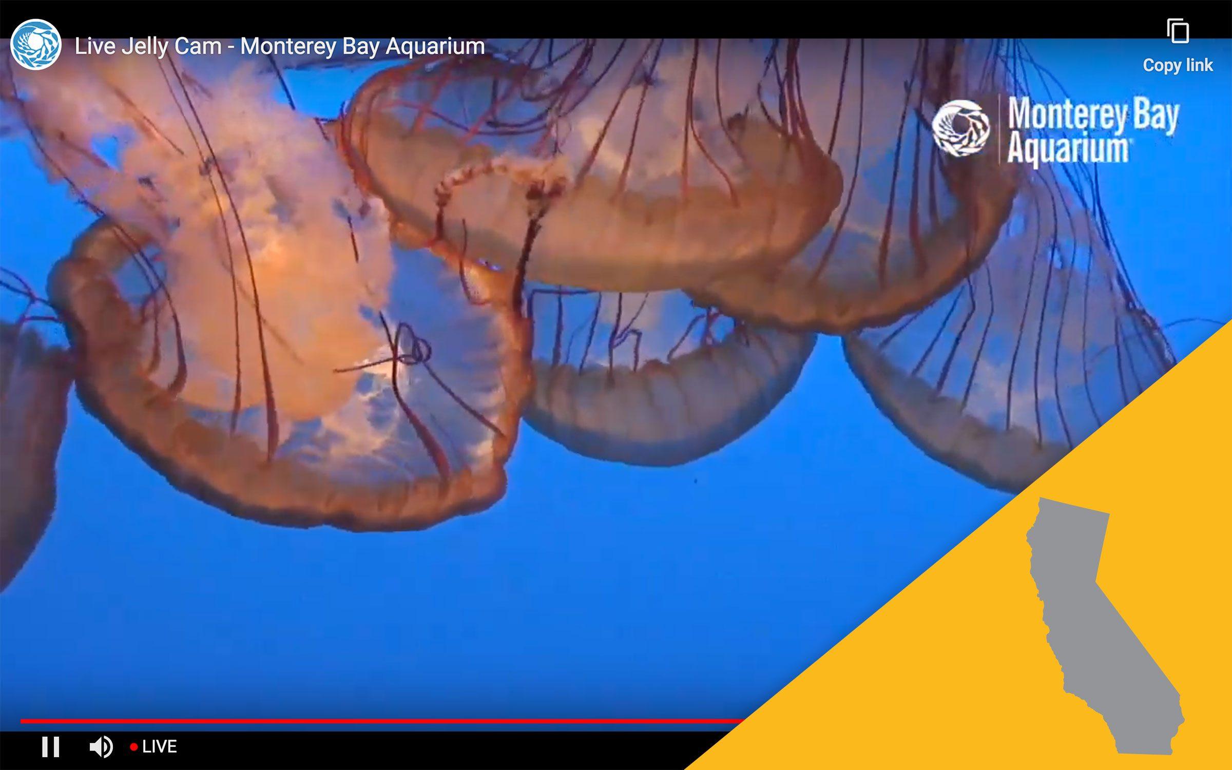 monterey bay aquarirum virtual tour