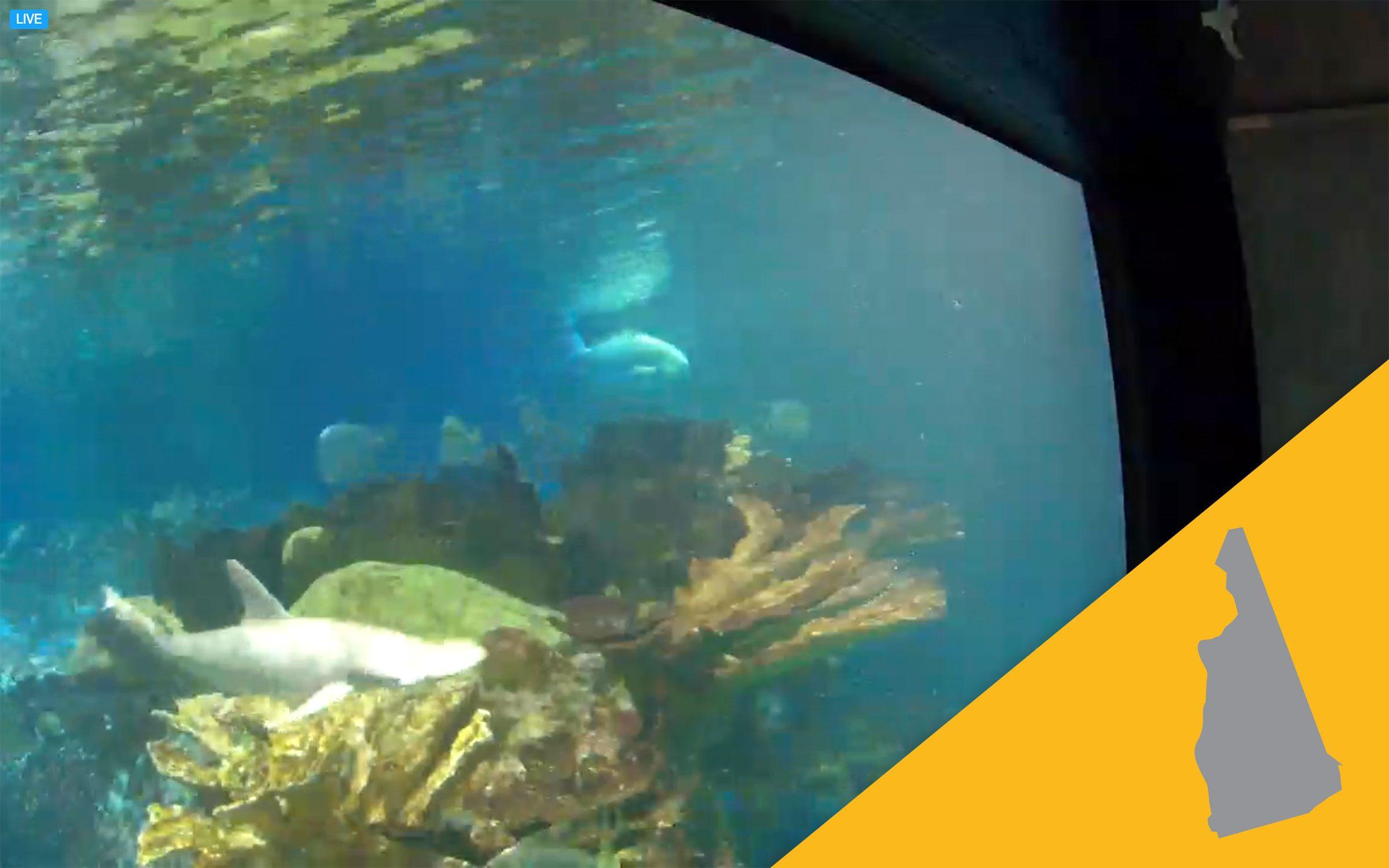 new england aquarium virtual tour