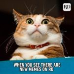 15 Funny Animal Memes You Can't Help But Laugh At