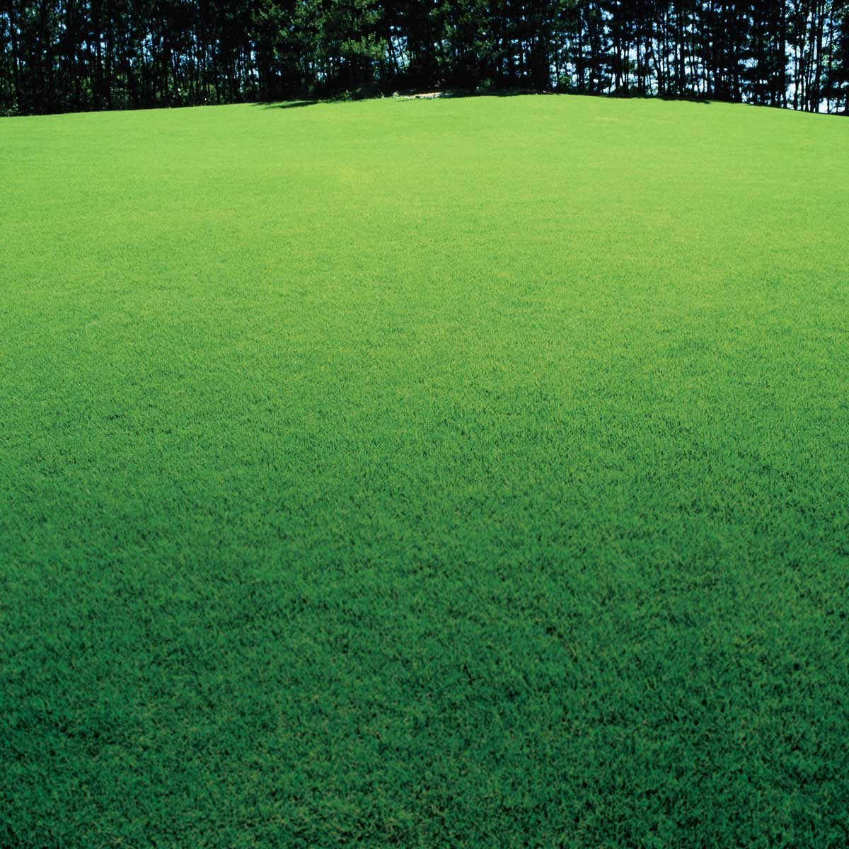 Patchy-Lawn