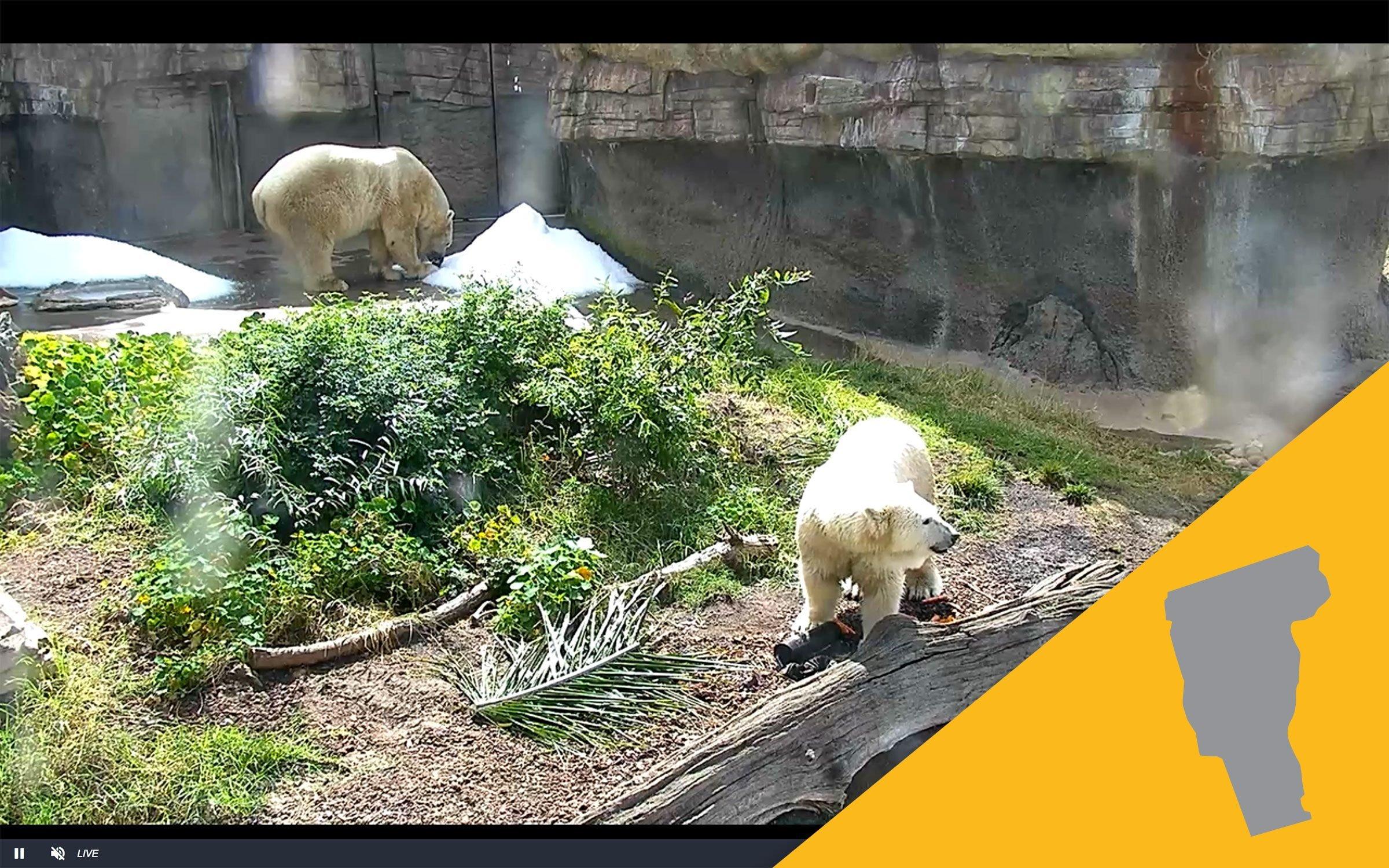 San Diego Zoo virtual tour