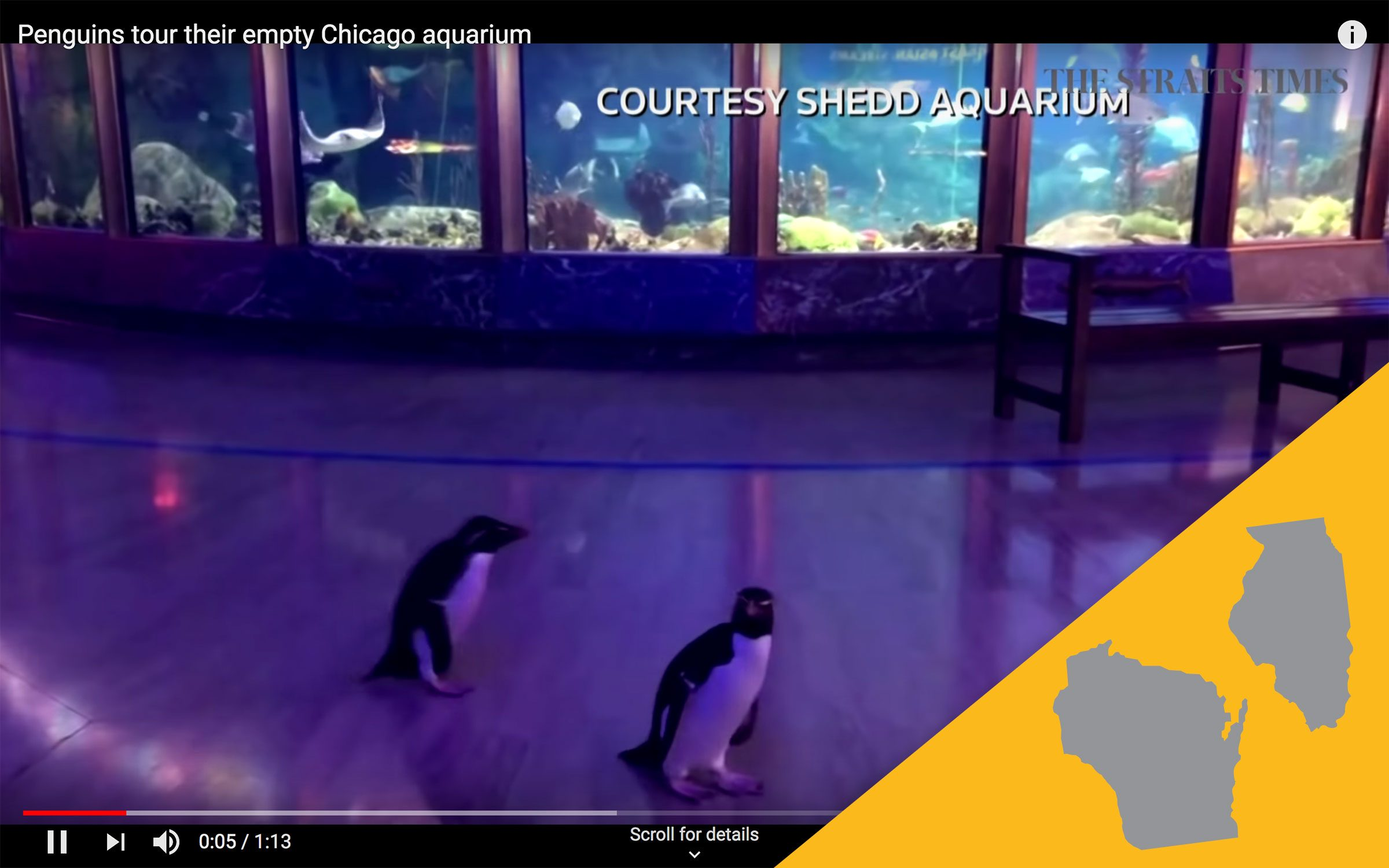 Shedd Aquarium virtual tour