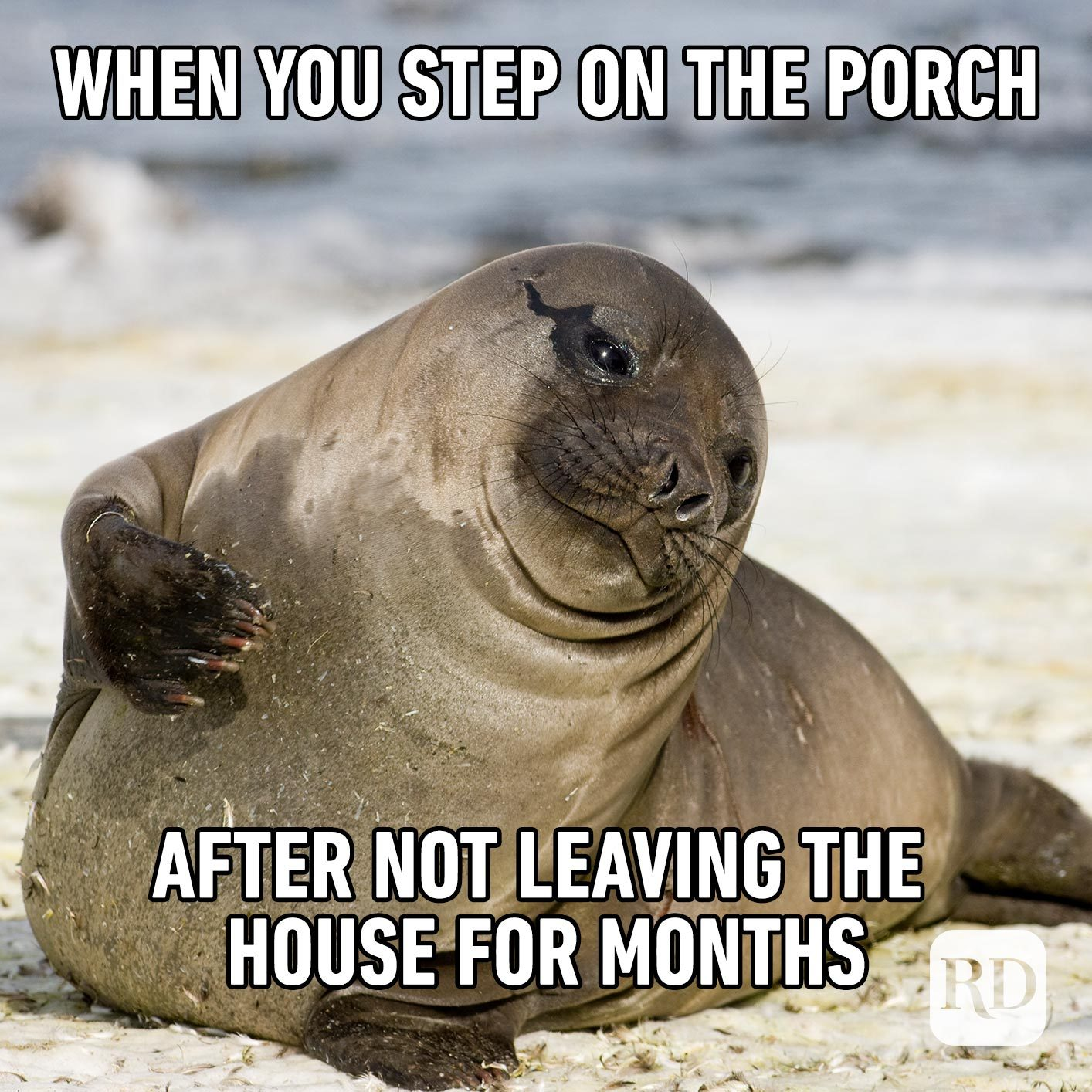 Seal basking in sun. Meme text: When you step on the porch after not leaving the house for months
