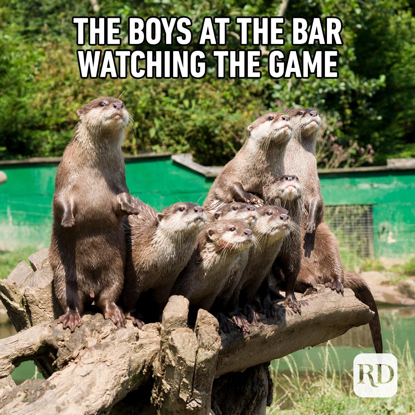 Beavers on a log. Meme text: The boys at the bar watching the game