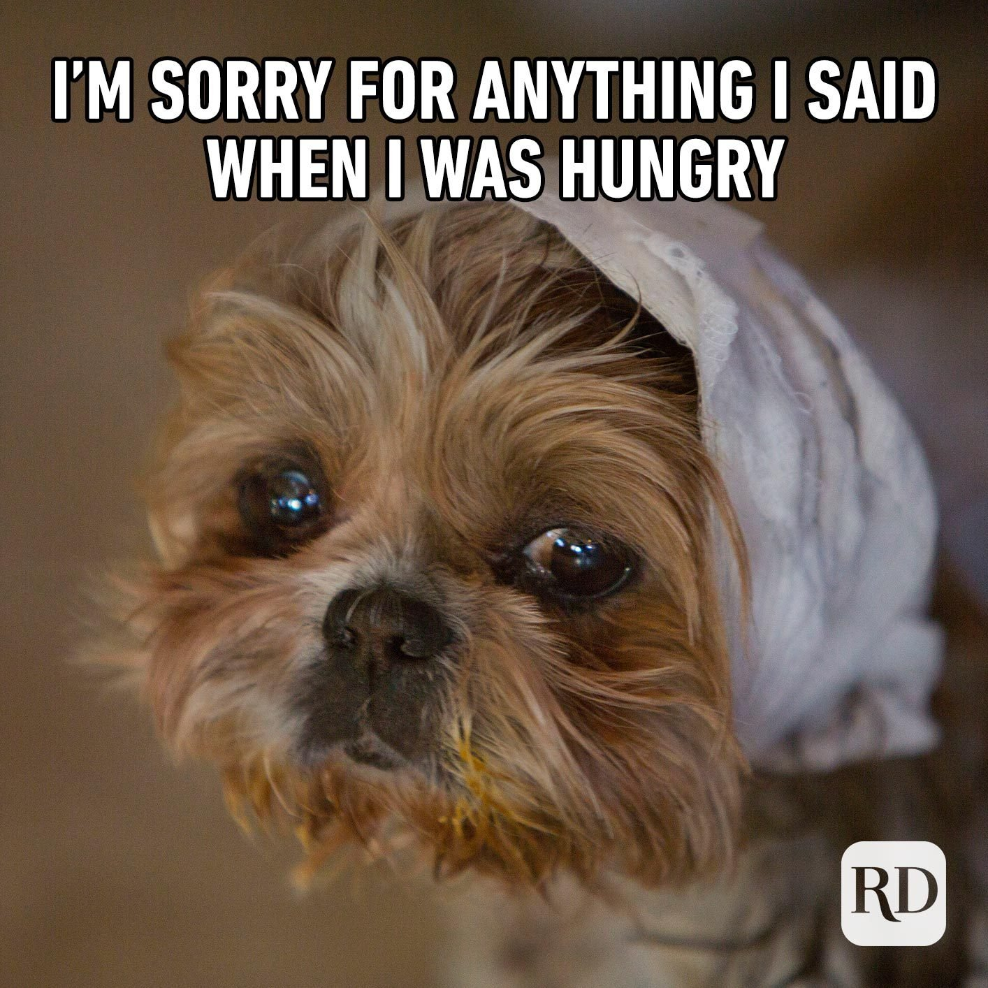 Sad dog. Meme text: I'm sorry for anything I said when I was hungry.