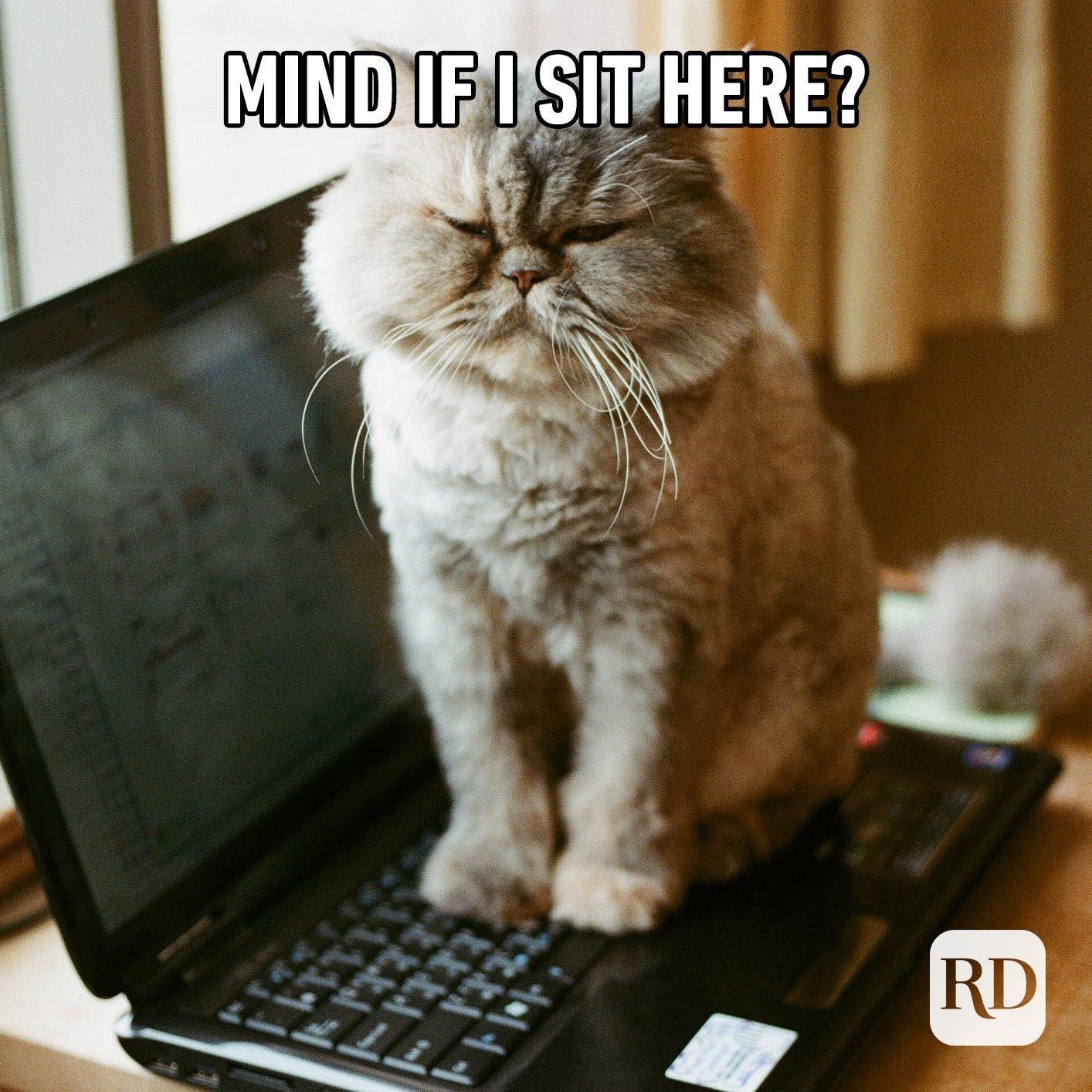 Cat sitting on laptop keys. Meme text: Mind if I sit here?