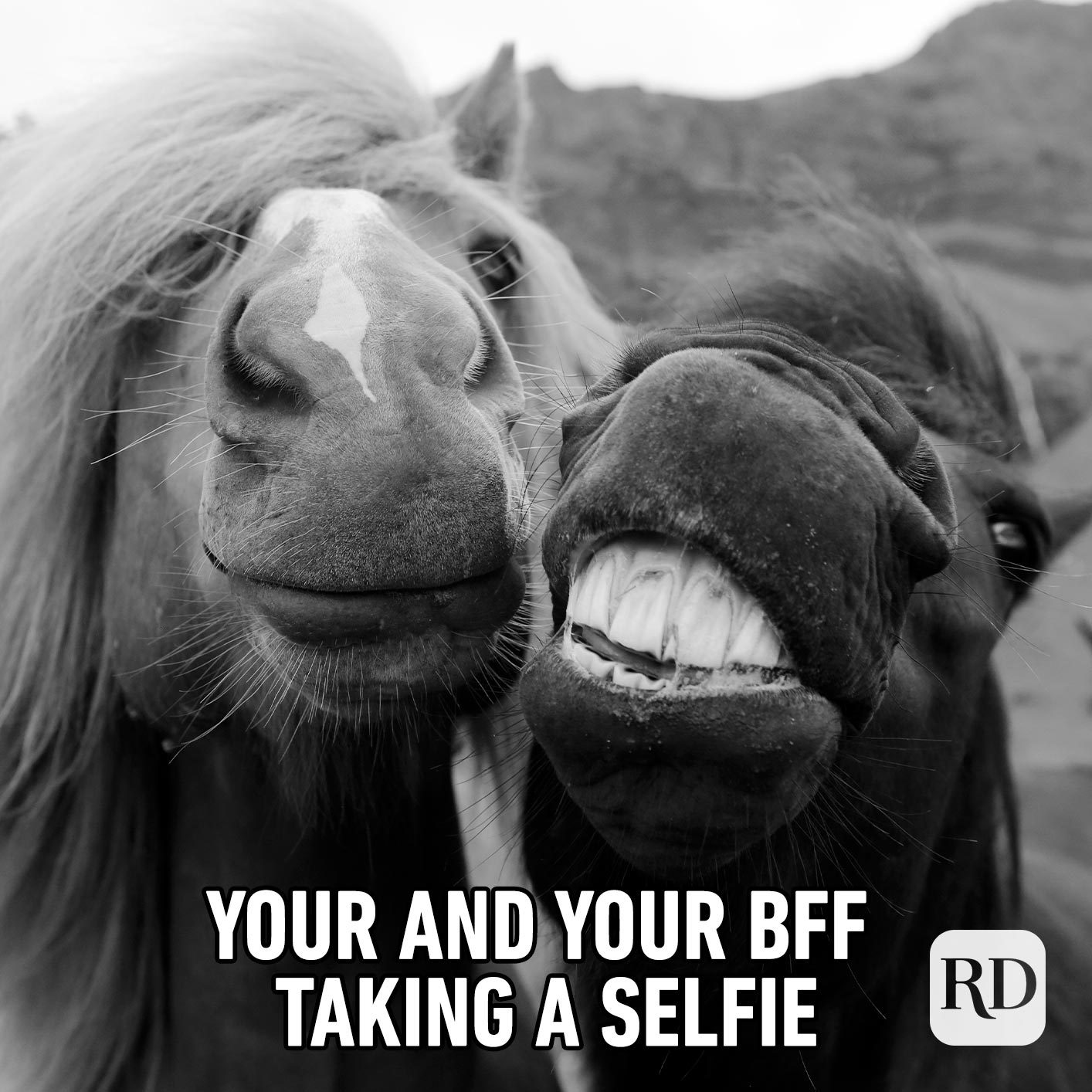 Two horses smiling for camera. Meme text: You and your BFF taking a selfie