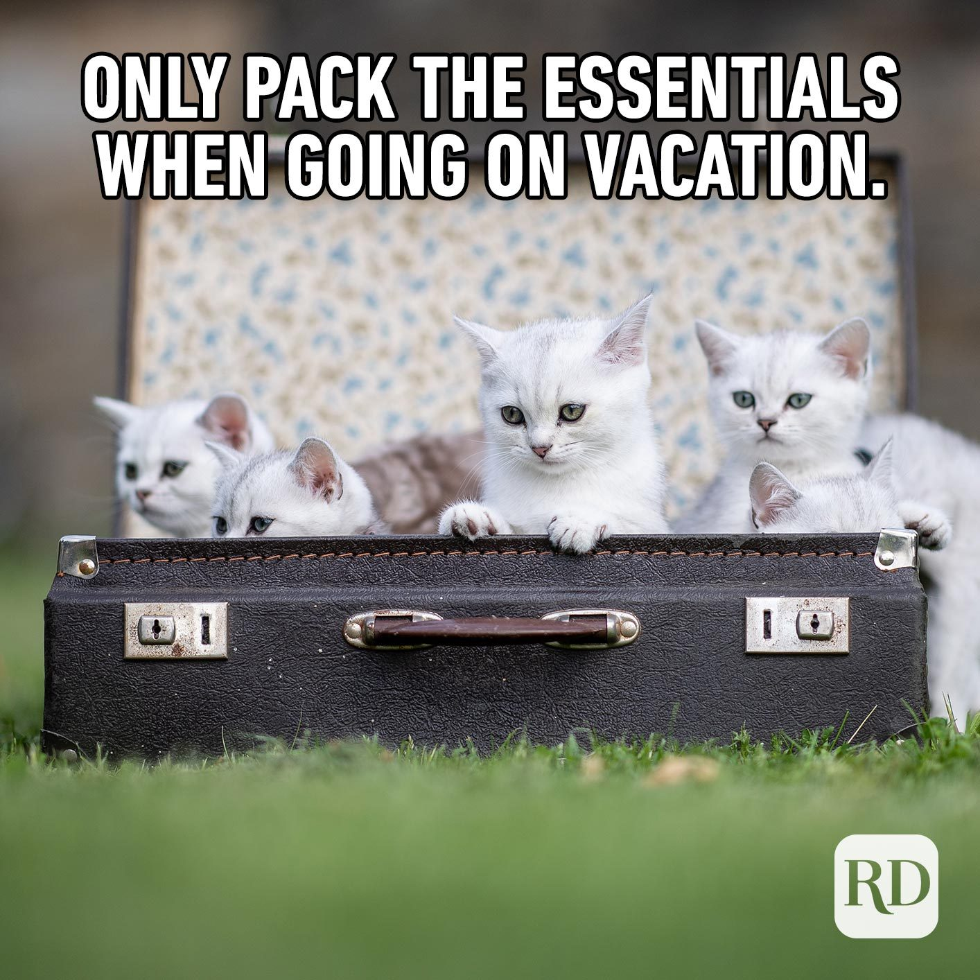 Cats in a suitcase. Meme text: Only pack the essentials when going on vacation.