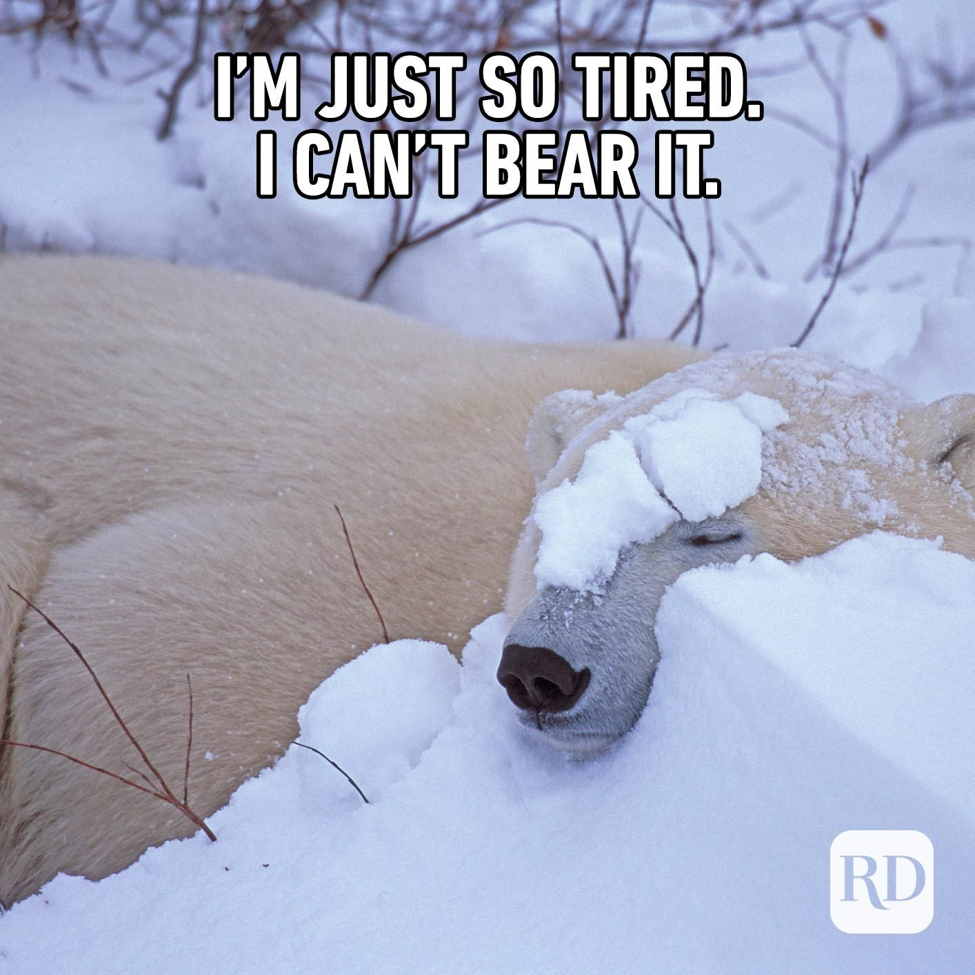 Polar bear in snow. Meme text: I'm just so tired. I can't bear it.