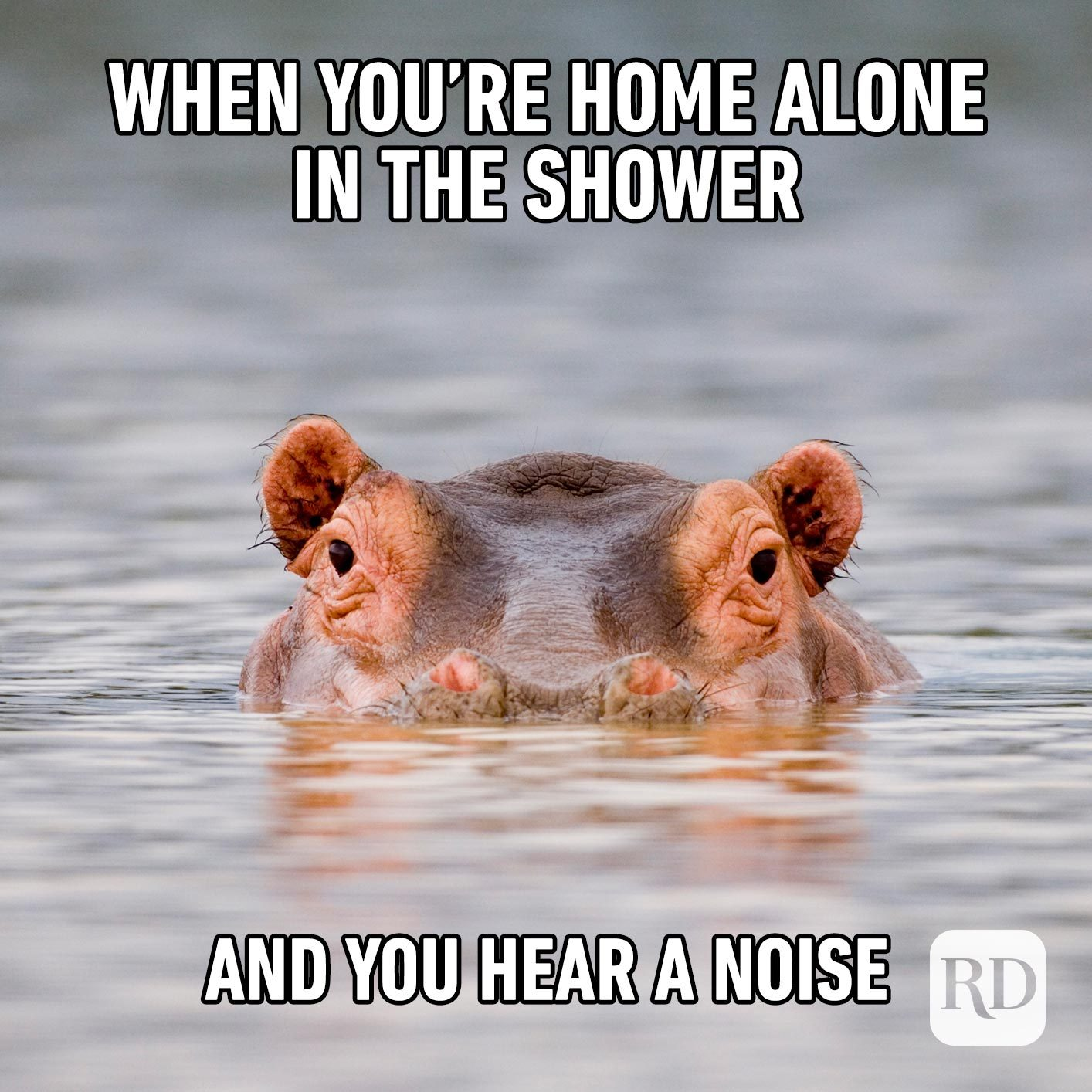 Hippo rising out of water. Meme text: When you're home alone in the shower and you hear a noise
