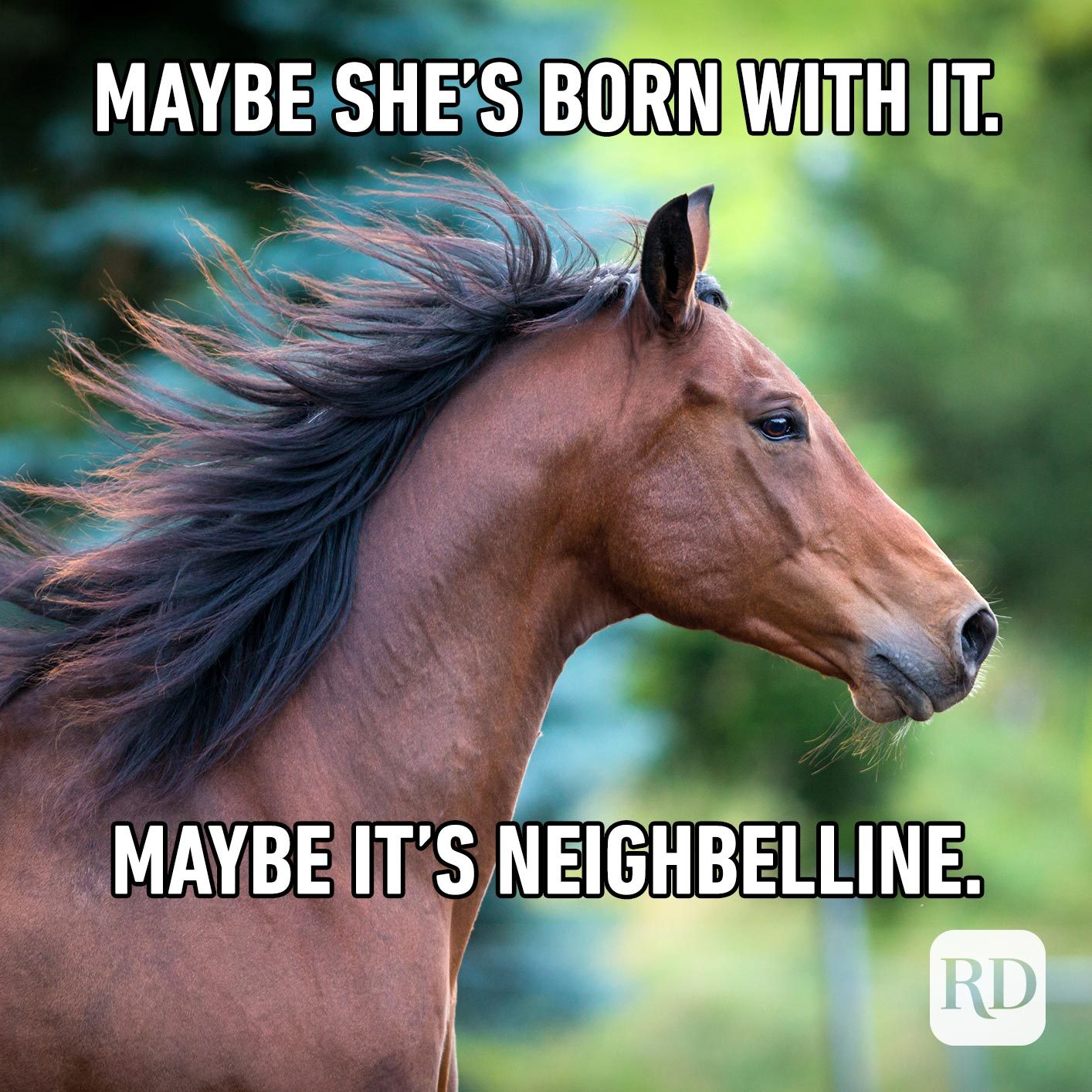 Horse with flowing hair. Meme text: Maybe she's born with it… maybe it's neighbelline