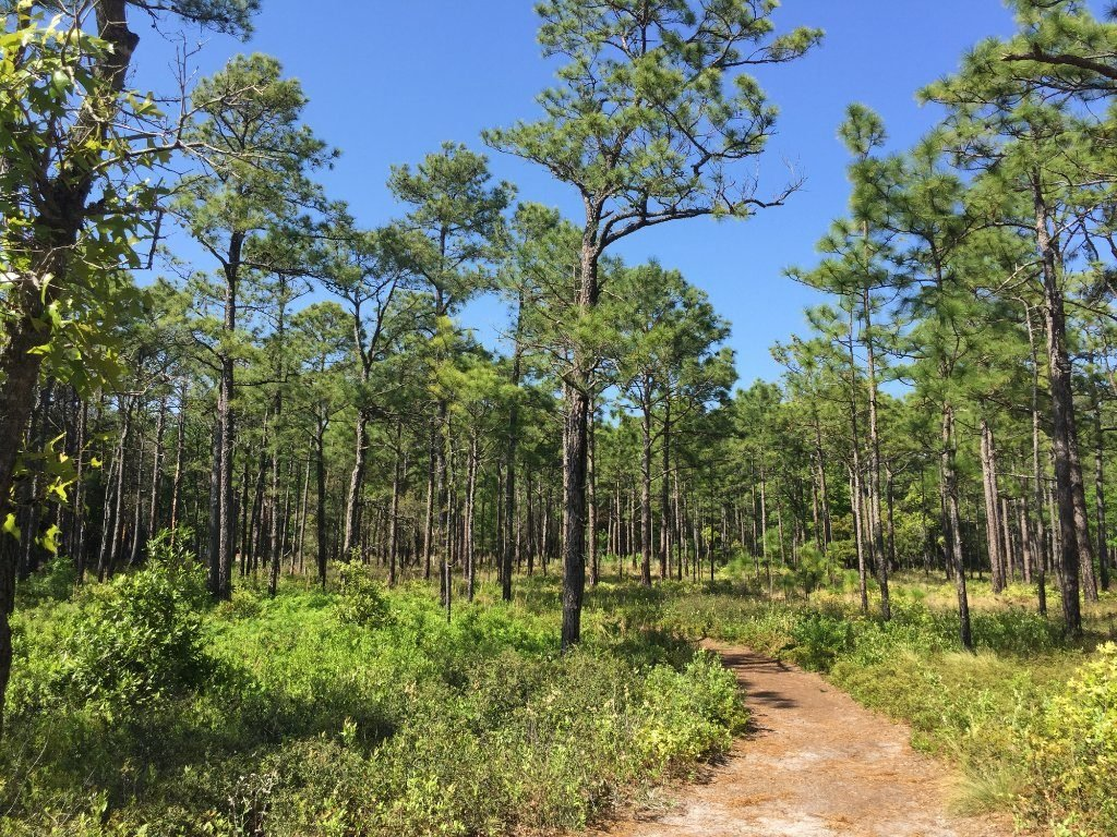 North Carolina: Carolina Beach State Park