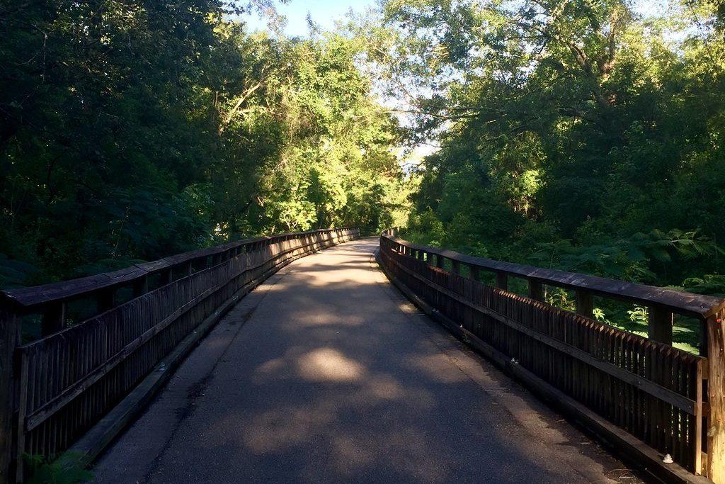 Bike trail in woods