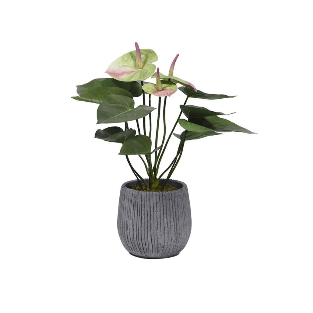 Anthurium Planter Decoration