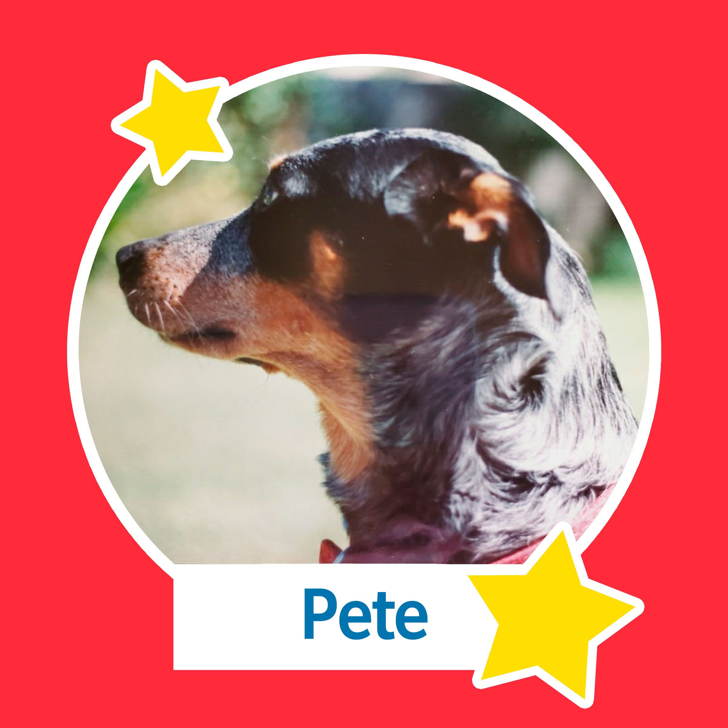 Pete the dog