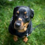 6 Common Dog Training  Mistakes You'll Regret Making