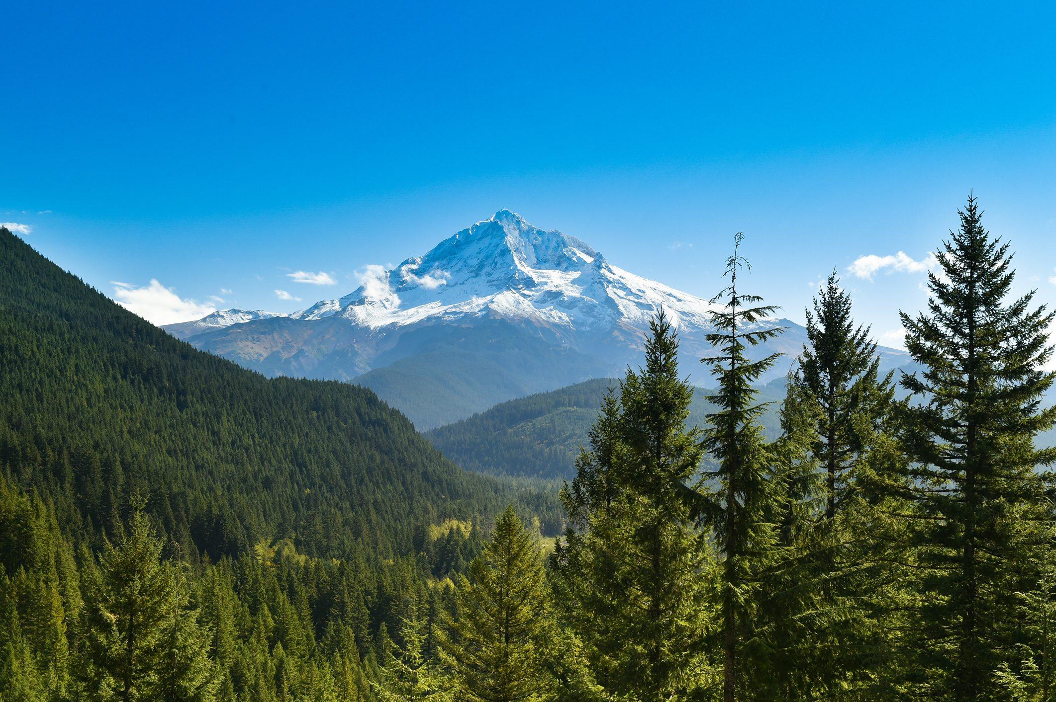 Mount Hood with pine trees