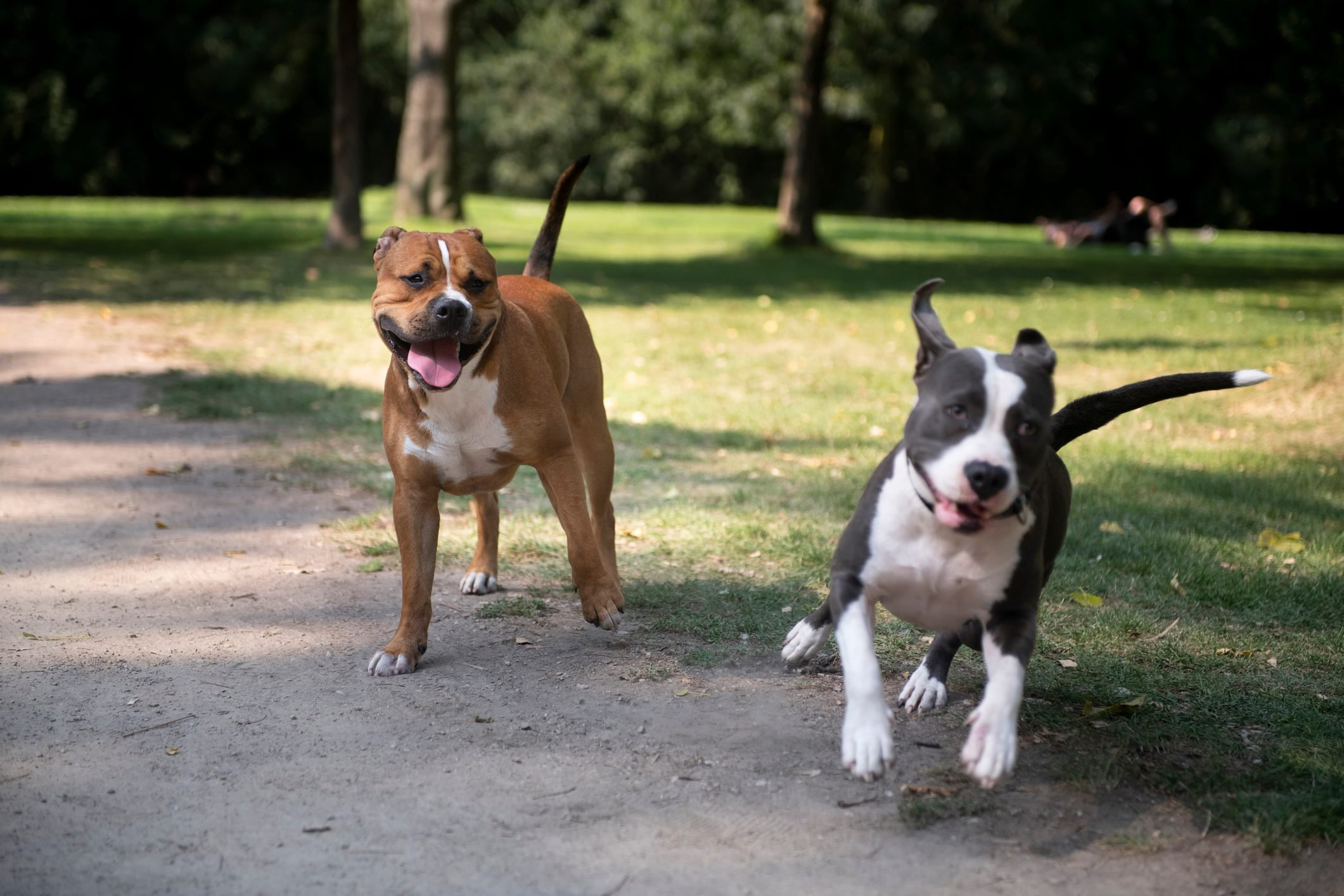 Happy dogs playing in the park