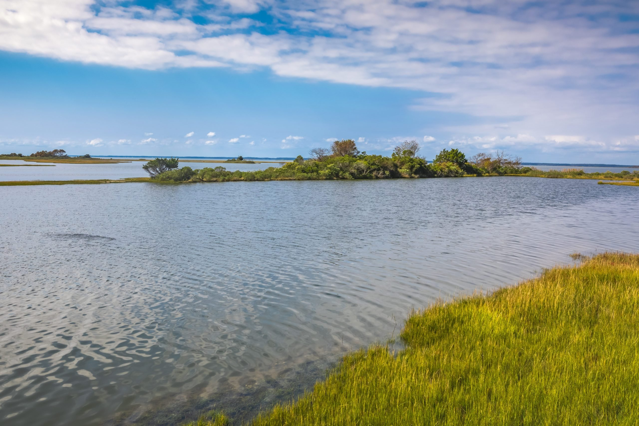 Life of the Marsh Nature Trail at Assateague National Seashore