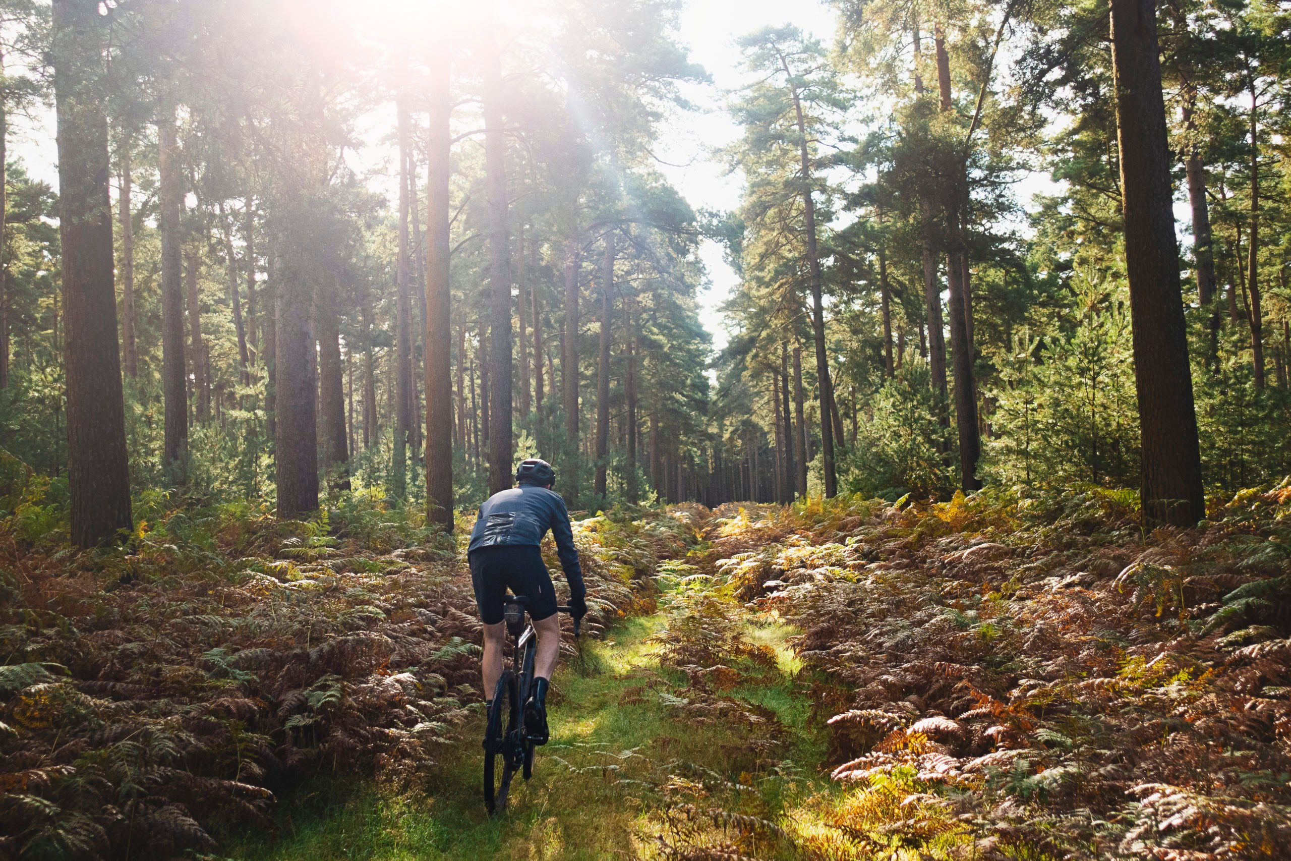 Cyclist on forest path
