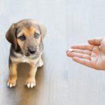 Can I Give My Dog Ibuprofen?