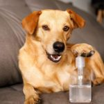 Why You Should Never Clean Your Dog's Paws with Hand Sanitizer