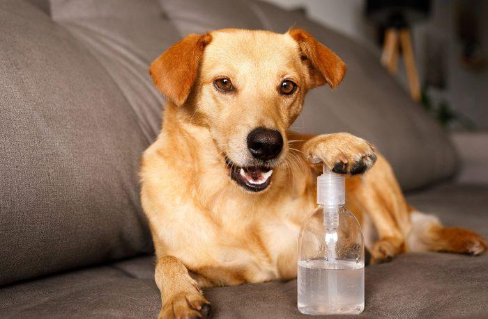 Funny dog pushing a hand sanitizer alcohol gel