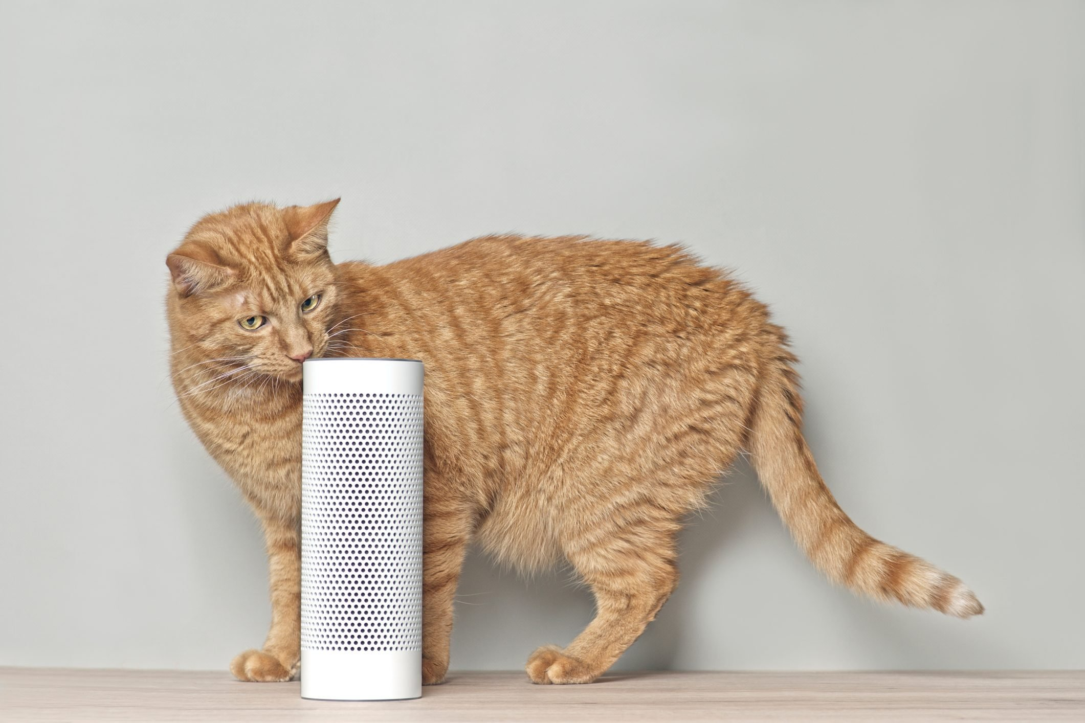 Cute Ginger Cat Looking Curious To A Voice Controlled Smart Speaker.