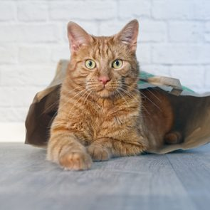 Ginger Cat In A Paper Bag Looking Curious To The Camera.