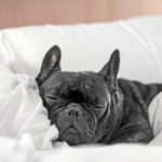 30 Best Pet-Friendly Hotels in America