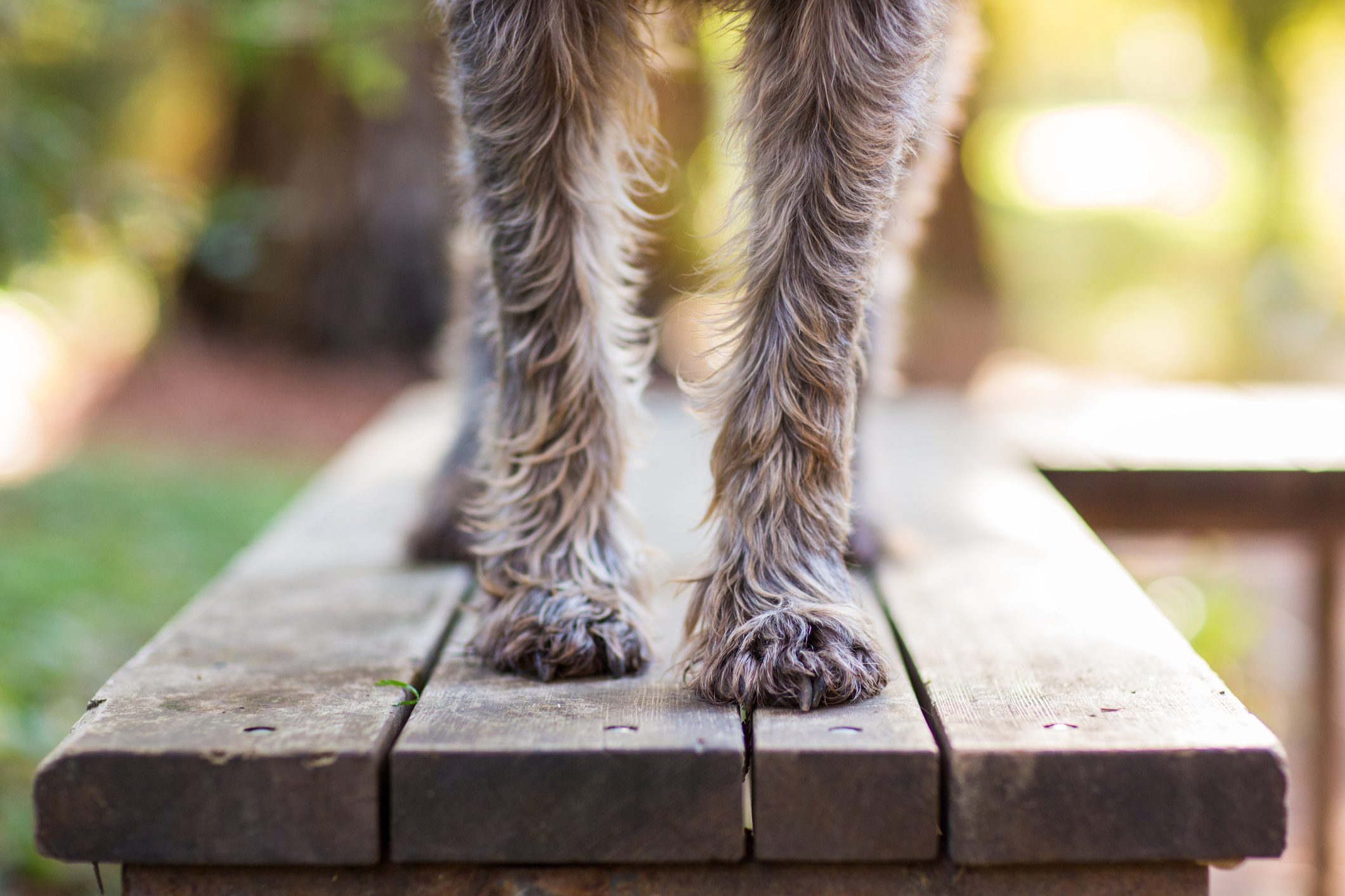 Dog Paws on Park Bench