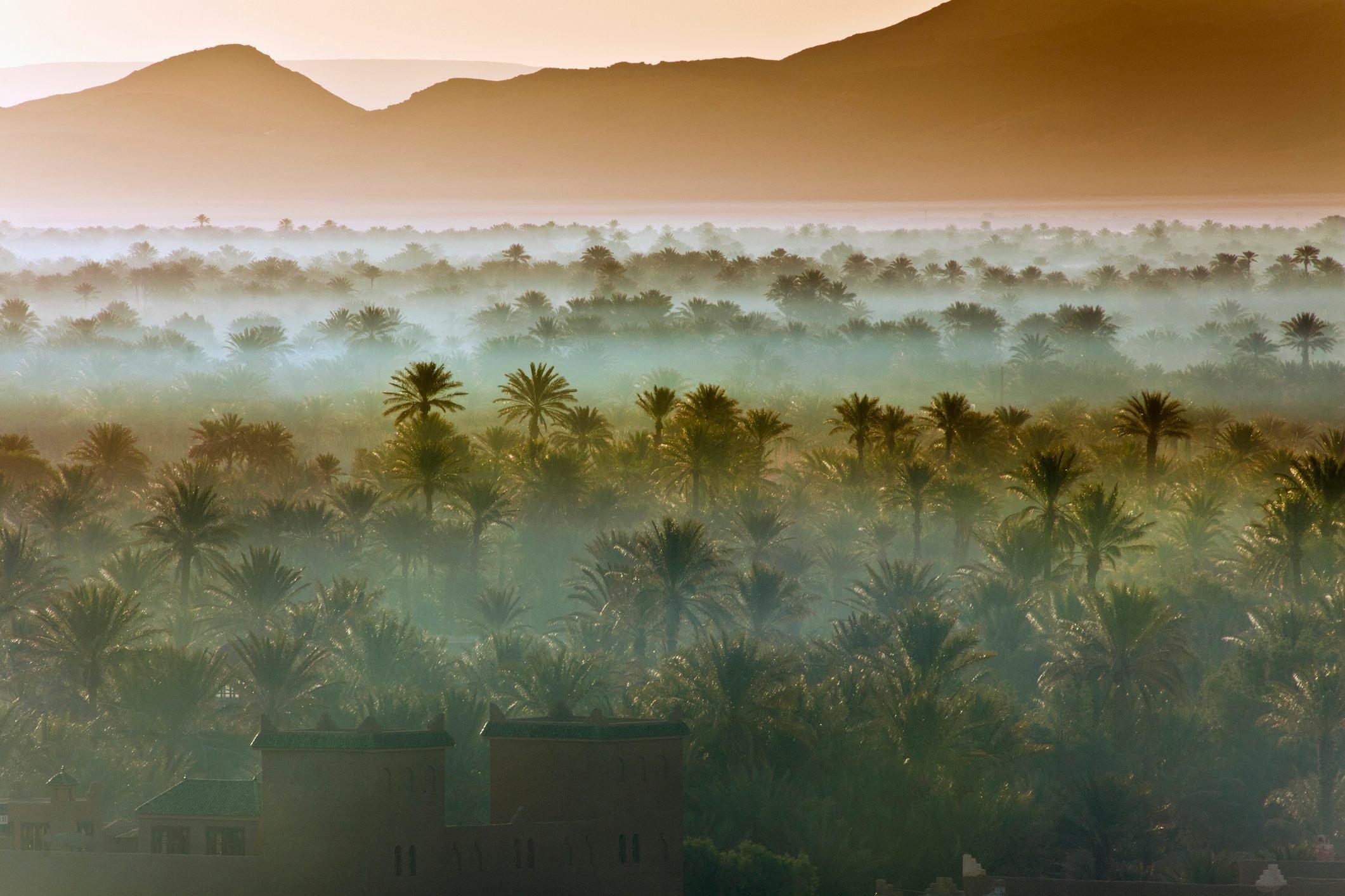 Morocco, near Zagora, Sunrise over Oasis and Palm Trees