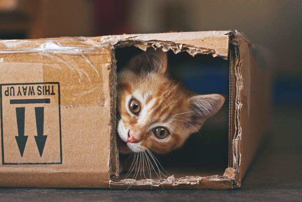 8 Cat Breeds That Get Stolen Most Often