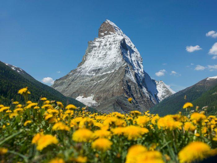 The Matterhorn above a dandelion meadow