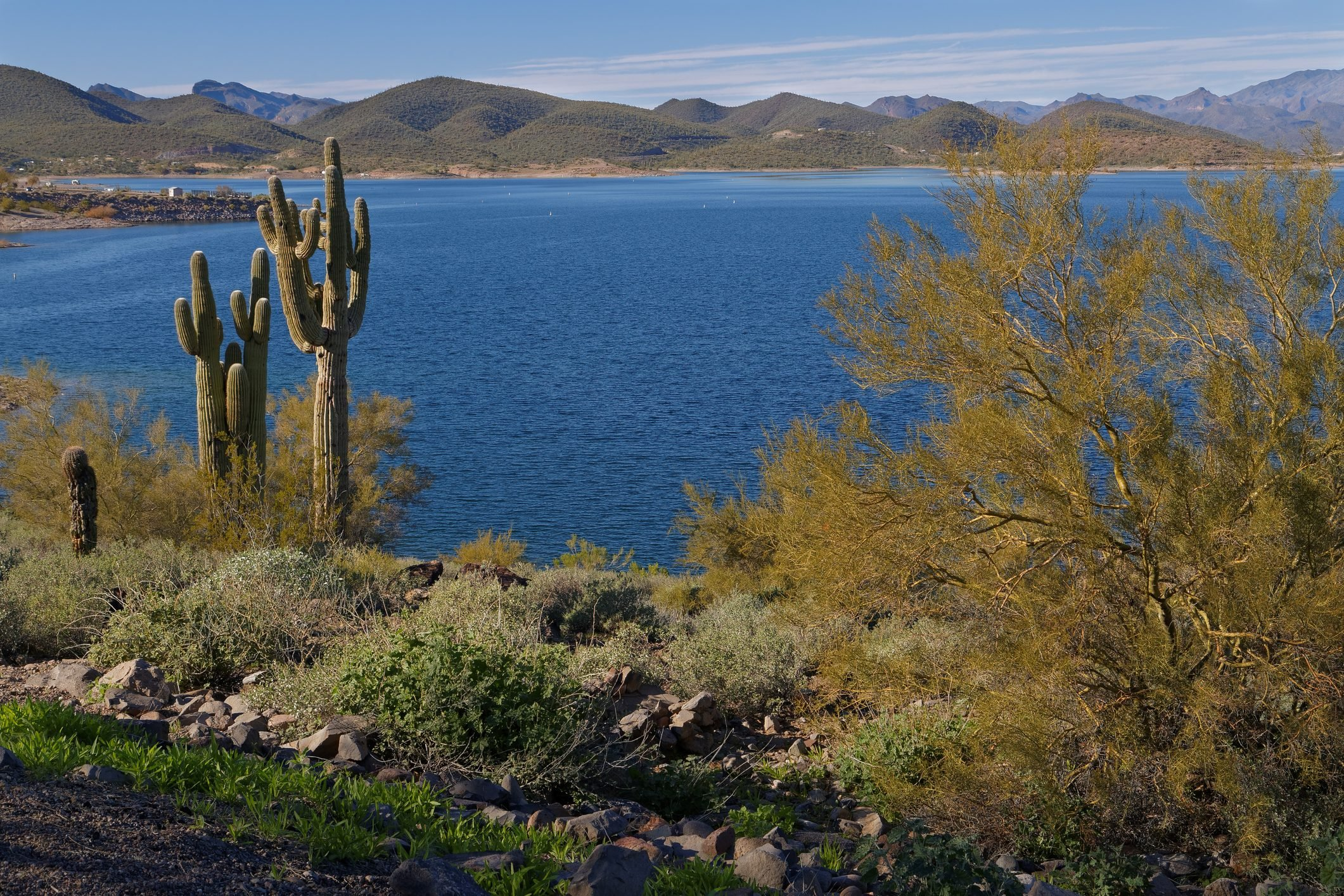 Saguaro Cactus & Palo Verde Along Lake Pleasant