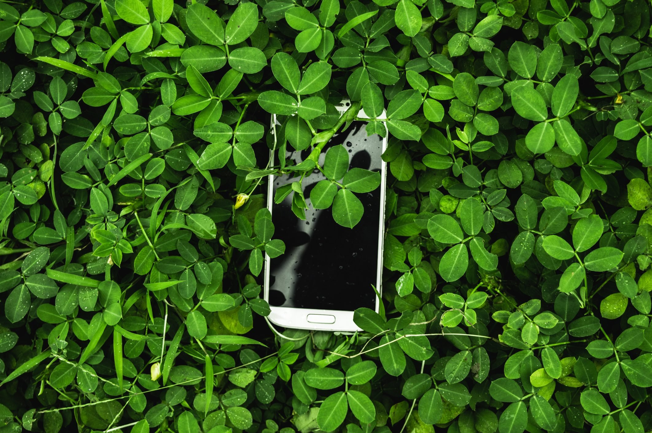 Directly Above Shot Of Smart Phone Over Plants